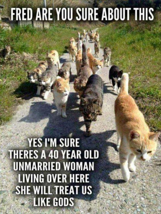 30 Hilarious Cat Memes #Cat Memes #Funny Pictures
