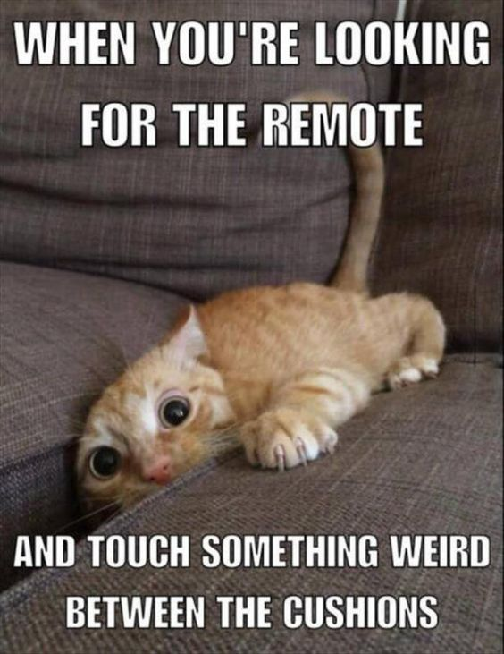 30 Funny Quotes and Sayings #Funny #Quotes