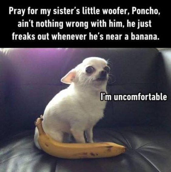 [Image: 30-Humor-Animal-Pictures-17-animals-Humor.jpg]