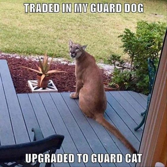 30 Humor Animal Pictures #animals #Humor