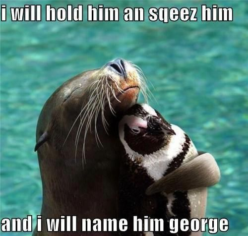 30 Animal Humor Quotes #animals #humor