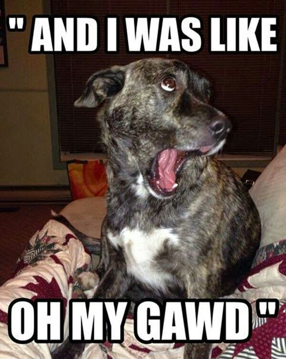 30 Animal Humor Quotes 5 Animals Humor Quotes And Humor