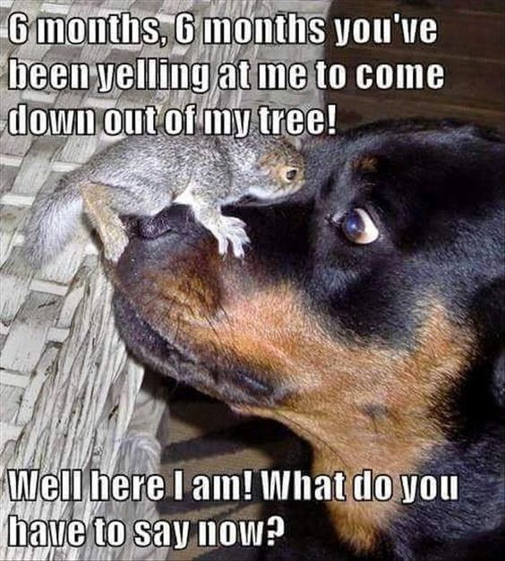 Animals Quotes Adorable 30 Animal Humor Quotes  Quotes And Humor