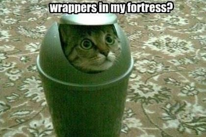 30 Really Hilarious Cat Pics