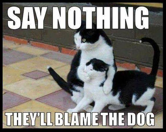30-Really-Hilarious-Cat-Pics-23-funny-cats-Humor.jpg