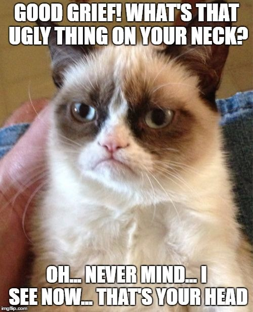 27 Grumpy Cat Funny Memes – Quotes and Humor