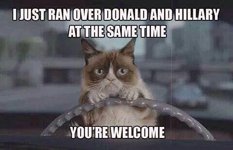 27 Grumpy Cat Funny Memes 19 Grumpy cat Grumpy cat memes 27 grumpy cat funny memes quotes and humor
