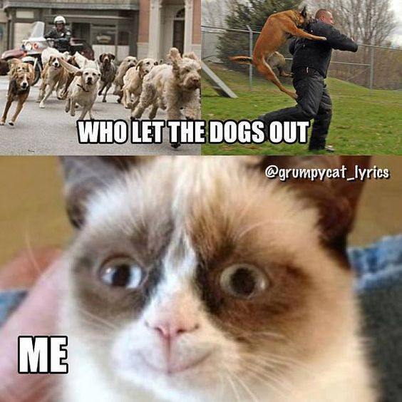 27 Grumpy Cat Funny Memes | Quotes and Humor