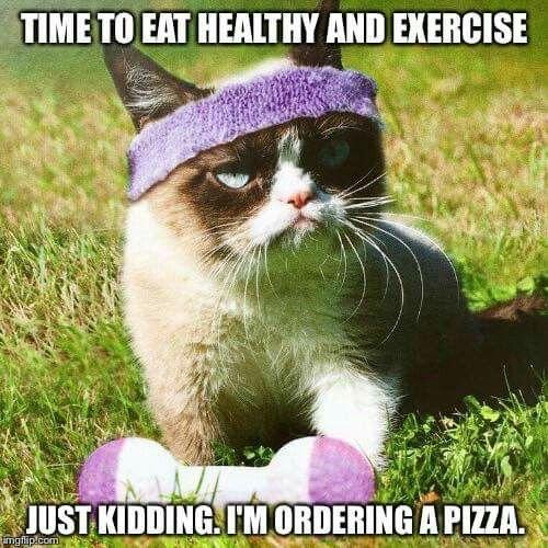 27 Grumpy Cat Funny Memes 5 Grumpy cat Grumpy cat memes 27 grumpy cat funny memes quotes and humor