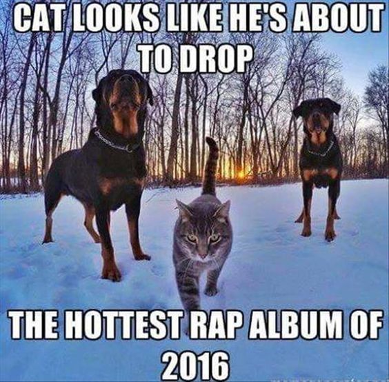 25 Best Memes About Dream Work: Top 25 Thug Life Cat Memes