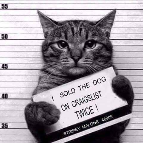 Top 25 Thug Life Cat Memes | Quotes and Humor