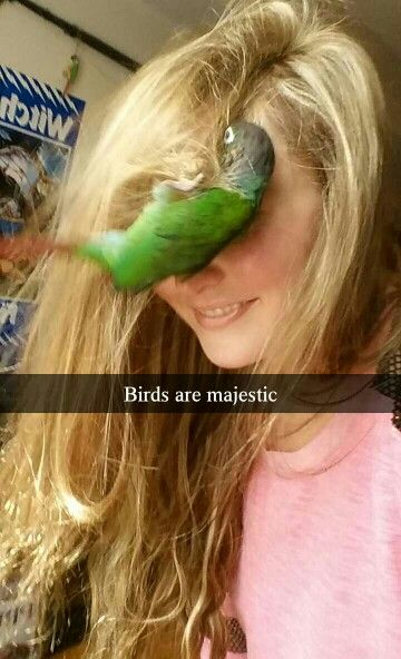 Bird Memes – Quotes and Humor