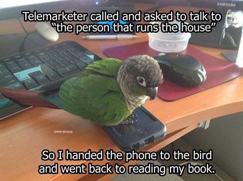 17 Bird Memes To Beak Your Interest With Images Funny Parrots