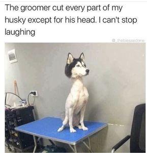 Top 20 Funny Memes