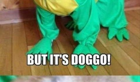 Top 20 Hilarious and Funny Puns Memes