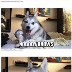 Top 20 Hilarious Puns dad Jokes Memes