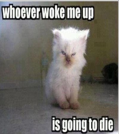 Top 20 Good Morning Memes