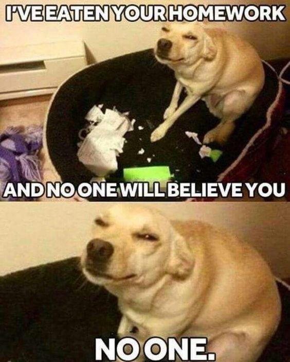 Top 22 Lol Funny Animals