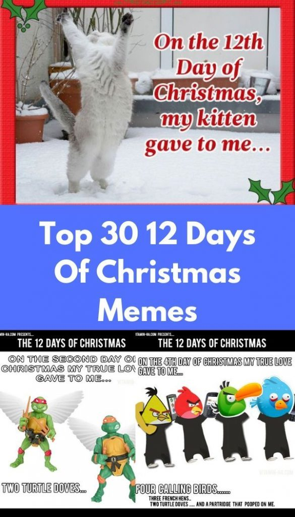 Christmas Memes Cats.Top 30 12 Days Of Christmas Memes Quotes And Humor