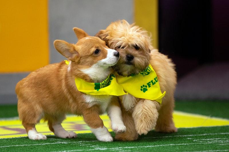Puppy Bowl.com/Adopt