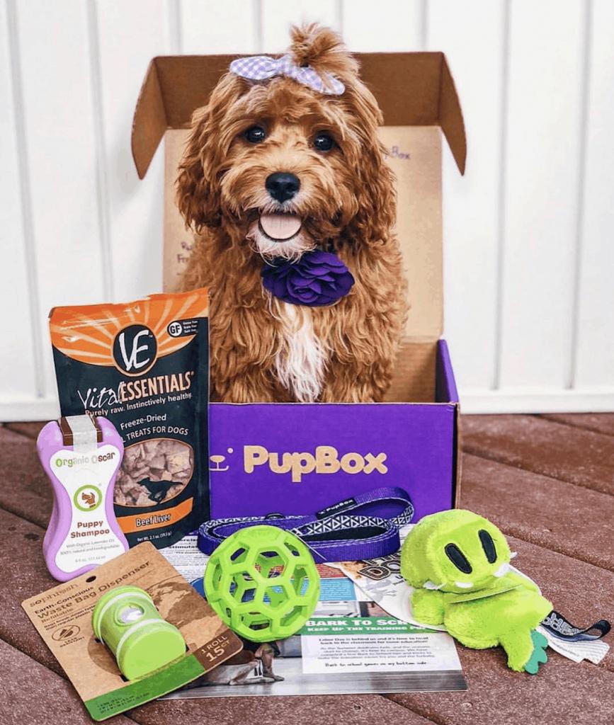 Pupbox Reviews